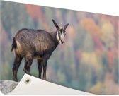 Geit op een rots  Tuinposter 120x80 cm - Tuindoek / Buitencanvas / Schilderijen voor buiten (tuin decoratie)