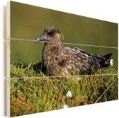Een vrouwelijke grote jager in haar nest Vurenhout met planken 90x60 cm - Foto print op Hout (Wanddecoratie)