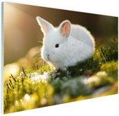 Baby konijn op mos Glas 30x20 cm - Foto print op Glas (Plexiglas wanddecoratie)