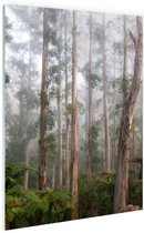 Bos Black Spur Australie Glas 80x120 cm - Foto print op Glas (Plexiglas wanddecoratie)