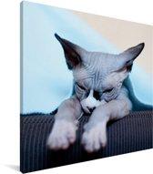 Een slaperige Sphynx kat op de bank Canvas 90x90 cm - Foto print op Canvas schilderij (Wanddecoratie woonkamer / slaapkamer) / Huisdieren Canvas Schilderijen