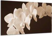 Glasschilderij Orchidee | Sepia, Bruin | 120x70cm 1Luik | Foto print op Glas |  F001928