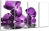 Glasschilderij Orchidee   Paars, Wit   160x80cm 4Luik   Foto print op Glas    F002068