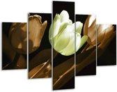 Glasschilderij Tulp | Bruin, Groen, Zwart | 100x70cm 5Luik | Foto print op Glas |  F002601