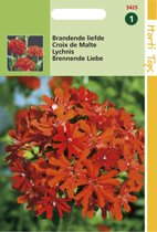Hortitops Zaden - Brandende Liefde (Lychnis chalcedonica)