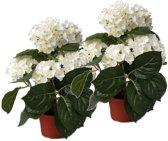 2 Stuks kunstplanten hortensia wit 36 cm - Kunstplanten/nepplanten met witte bloemen