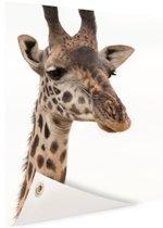 Portret van een giraffe Tuinposter 40x60 cm - Foto op Tuinposter / Schilderijen voor buiten (tuin decoratie)