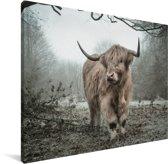 Schotse hooglander in de herfst Canvas 40x30 cm - klein - Foto print op Canvas schilderij (Wanddecoratie woonkamer / slaapkamer) / Wilde dieren Canvas Schilderijen
