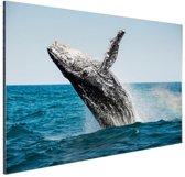 Springende walvis met regenboog Aluminium 90x60 cm - Foto print op Aluminium (metaal wanddecoratie)