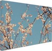 Bloesem Canvas 80x60 cm - Foto print op Canvas schilderij (Wanddecoratie woonkamer / slaapkamer)