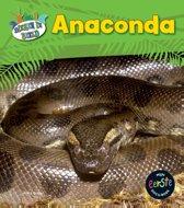 Dieren in beeld - Anaconda