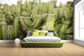 Groep cactusplanten Fotobehang 380x265