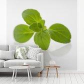 Fotobehang vinyl - Close up van de groene oregano bladeren breedte 220 cm x hoogte 220 cm - Foto print op behang (in 7 formaten beschikbaar)