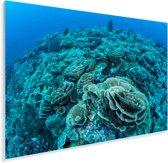 Koraal in het heldere water van het Nationaal park Wakatobi Plexiglas 30x20 cm - klein - Foto print op Glas (Plexiglas wanddecoratie)
