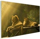 Leeuwen in de jungle Glas 90x60 cm - Foto print op Glas (Plexiglas wanddecoratie)