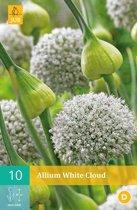 Allium White Cloud - sierui - 2 sets