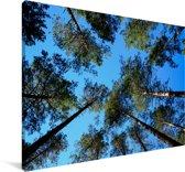De hoge bomen in het Nationaal Park Białowieża in Polen Canvas 180x120 cm - Foto print op Canvas schilderij (Wanddecoratie woonkamer / slaapkamer) XXL / Groot formaat!