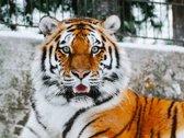 Schilderij tijger 120 x 80 - Pixello - canvas - woonkamer - slaapkamer - dieren - print