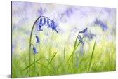 Sterhyacinten in een groen grasveld Aluminium 120x80 cm - Foto print op Aluminium (metaal wanddecoratie)