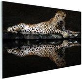Luipaard bij het water Glas 180x120 cm - Foto print op Glas (Plexiglas wanddecoratie) XXL / Groot formaat!