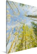 Reusachtige bomen in het Nationaal park Sierra de Guadarrama in Spanje Canvas 80x120 cm - Foto print op Canvas schilderij (Wanddecoratie woonkamer / slaapkamer)