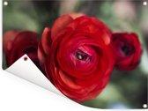 Drie rode boterbloemen Tuinposter 40x30 cm - klein - Tuindoek / Buitencanvas / Schilderijen voor buiten (tuin decoratie)