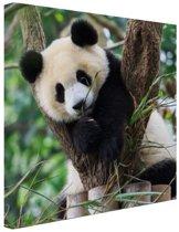 Panda welp Canvas 80x60 cm - Foto print op Canvas schilderij (Wanddecoratie)