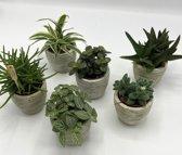 6x Groene kamerplanten mix in stoer rib potje