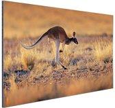 Springende kangoeroe warme gloed Aluminium 120x80 cm - Foto print op Aluminium (metaal wanddecoratie)
