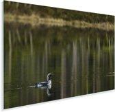 Parelduiker zwemt door het water Plexiglas 180x120 cm - Foto print op Glas (Plexiglas wanddecoratie) XXL / Groot formaat!