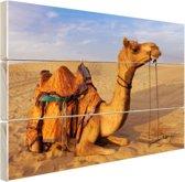 Dromedaris kameel in zandduinen Hout 80x60 cm - Foto print op Hout (Wanddecoratie)