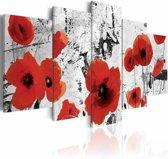 Schilderij - Klaprozen , rood wit , 5 luik
