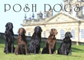 Posh Dogs