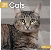 Cats 365 Days Square Wall Calendar 2020