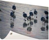 Meeuwen in het water Tuinposter 120x80 cm - Tuindoek / Buitencanvas / Schilderijen voor buiten (tuin decoratie)