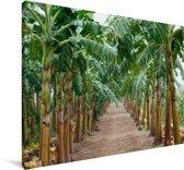 Landweg omringd door de banaanbomen Canvas 140x90 cm - Foto print op Canvas schilderij (Wanddecoratie woonkamer / slaapkamer)