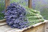 4 bossen lavendel uit de Provence
