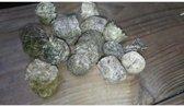 Land-schildpad voer Puur Natuur