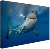Grote witte haai Canvas 180x120 cm - Foto print op Canvas schilderij (Wanddecoratie woonkamer / slaapkamer) / Dieren Canvas Schilderijen XXL / Groot formaat!