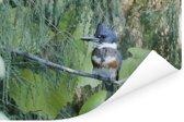 Een Bandijsvogel tussen de groene bladeren Poster 180x120 cm - Foto print op Poster (wanddecoratie woonkamer / slaapkamer) XXL / Groot formaat!