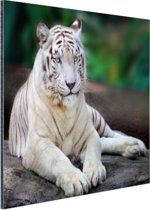 FotoCadeau.nl - Witte tijger Aluminium 30x20 cm - Foto print op Aluminium (metaal wanddecoratie)