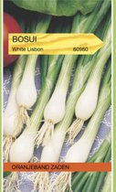 OBZ 660980 Bosui White Lisbon