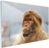 Berberaap portret Glas 90x60 cm - Foto print op Glas (Plexiglas wanddecoratie)
