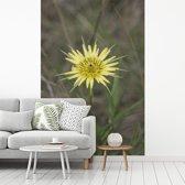 Fotobehang vinyl - Een gele morgenster in een groen grasveld breedte 190 cm x hoogte 280 cm - Foto print op behang (in 7 formaten beschikbaar)