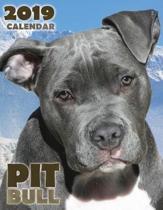 Pit Bull 2019 Calendar