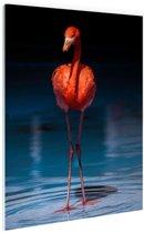 Flamingo donkere achtergrond Glas 120x180 cm - Foto print op Glas (Plexiglas wanddecoratie)