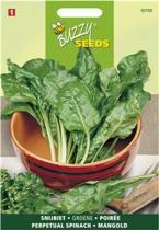 Snijbiet Groene Gewone 5 g - Beta vulgaris