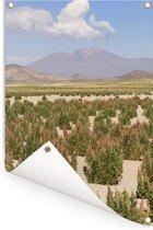 Groene en rode quinoa planten onder de wolken Tuinposter 60x90 cm - Tuindoek / Buitencanvas / Schilderijen voor buiten (tuin decoratie)
