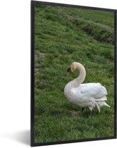 Foto in lijst - Een witte trompetzwaan in het gras fotolijst zwart 40x60 cm - Poster in lijst (Wanddecoratie woonkamer / slaapkamer)