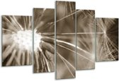 Glas schilderij Bloem | Sepia | 170x100cm 5Luik | Foto print op Glas |  F006478